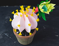 Paper Cactus Plant