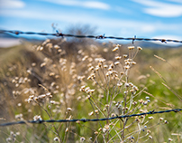 Grass, Barbed Wire and Blue Sky