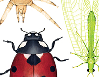 Entomology Illustrations