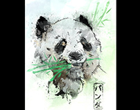 Panda / Watercolor in the Wild Collection