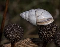 Snails, snails, snails...