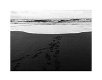 Landscapes - BW