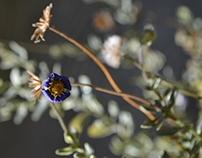 La flor de mi jardín // Fotografía