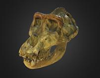 3D сканирование в Дарвиновском музее