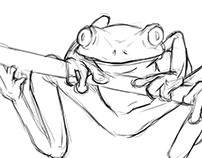 Study Sheet Series: Frogs