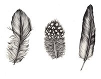 Feather Illustrations (Part two)