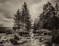 Black River Pines