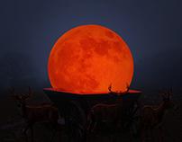 Moon falling in the wild