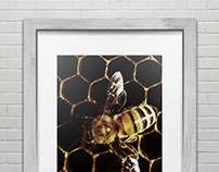 FREE PSD / Framed Poster / Bee
