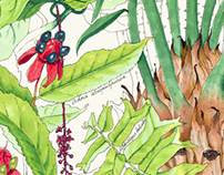 Botanical sketches #1
