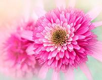 Beautiful Flower Photography