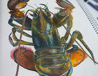 Lobster in Watercolor