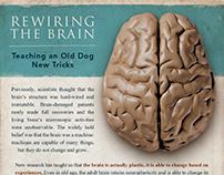 Rewiring the brain - infographic