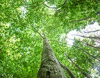 La Gravelline, métier de forestier|Reportage corporate