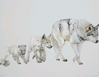 Canis Lupus for Illustraciencia III