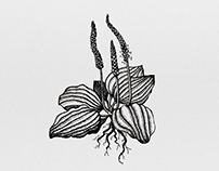 Botanical Ink Illustrations