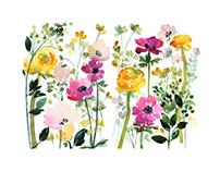 Spring flora + Video