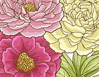 Peonies Floral Graphic Set