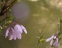 Flowering Dusk