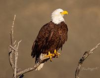 Wildlife Along Snake River Road