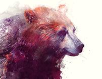 Bear // Calm