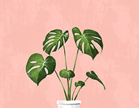 Illustration | Monstera