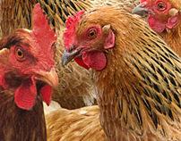 UBB bank campaign - chicken
