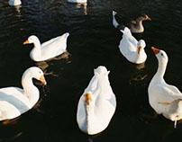 Snowday Duckies!