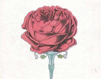Rosa Brillando