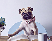 The Workaholic Pug