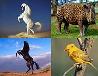 New Animal Species