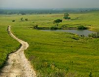 Tallgrass Prairie of America