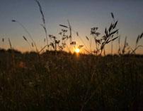 Sunset at Creeksea