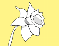 Spring Daffodil Illustration