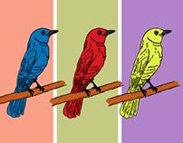 Little bird illustrations