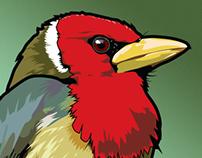 BirdsEye App Icons