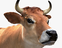 Adult Jersey Cow 3D Model