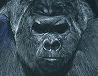 Graduate Thesis - Illustrations of animals