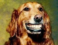 Preventive Dental Care for Dogs