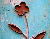Hoofar Haghighi's flowers