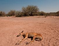 Las Ollas, entre el desierto y la sal