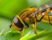 Cyborg Bee