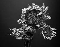 fiori neri