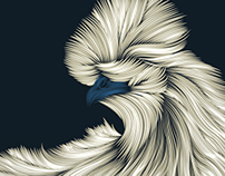 Fluffy Silkie Chicken