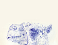 My Memo Diary: Camel