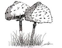 Mushrooms - July 2013