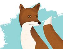 Vulpes vulpes -- Red Fox