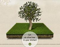 Vasileios Griekse Olive Oil