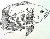 Tropical Fish (Fresh Water) - May 2013