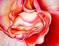 """""""Rose Begonia"""""""
